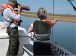 Bird watching Ria Formosa